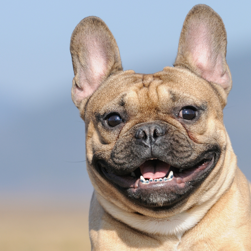 Dogs with Braces